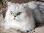 List of Most Common Cat / Feline Diseases and Symptoms