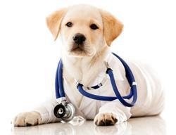 Vesicourachal Diverticula in Dogs , Symptoms , Diagnosis and Treatment