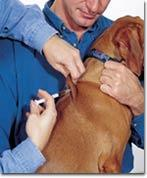 Vaccination Recommendations for Puppies