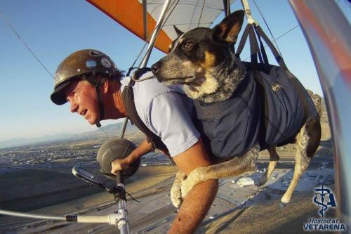 man and his dog flying with paraglider