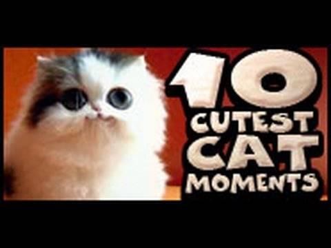 vetarena - 10 Cutest Cat Moments
